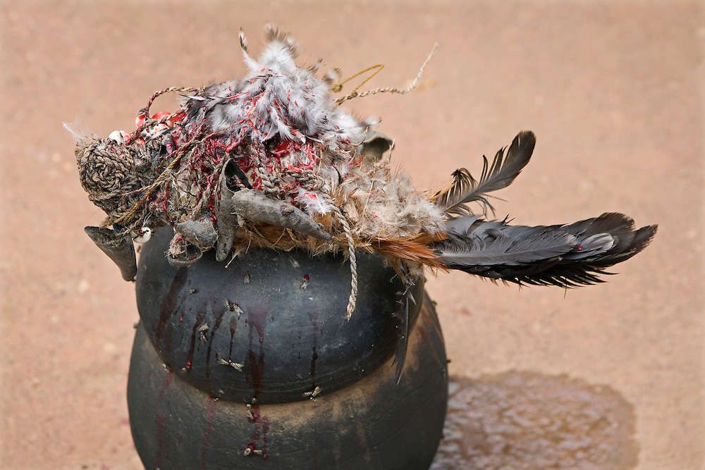 A Ghanaian Concoction Man has beheaded a chicken to determine whether a child (usually with a disability) is a spirit child. These predictions are made through various rituals, which include; the use of sacrificial goats, the fresh blood of chickens, observing the behaviour of the beheaded chicken and various ritualistic instruments and objects.
