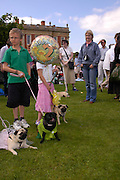 Pug Dog club Tea party held at Cottesbrook Hall.  ( home of  Mr. and Mrs. Alastair Macdonald-Buchanan ) 26 June 2005. . ONE TIME USE ONLY - DO NOT ARCHIVE  © Copyright Photograph by Dafydd Jones 66 Stockwell Park Rd. London SW9 0DA Tel 020 7733 0108 www.dafjones.com