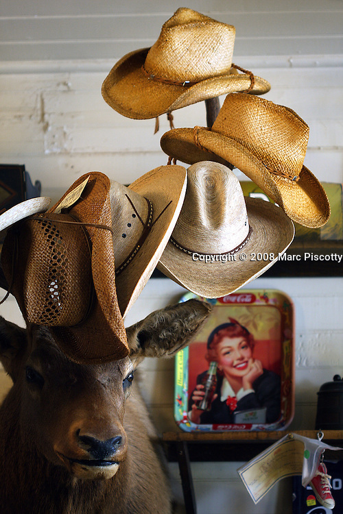 SHOT 5/18/08 1:06:06 PM - Cowboys hats displayed for sale atop the antlers of a stuffed deer in the St. Elmo General Store. The town is a ghost town located in Chaffee County, Colorado, United States. Founded in 1880, St. Elmo lies in the heart of the Sawatch Range, 20 miles southwest of Buena Vista. To this day it is one of Colorado's most preserved ghost towns. Nearly 2000 people settled in this town when mining for gold and silver became evident. The mining industry started to decline in the early 1920s, and in 1922 the train discontinued service. There are currently 8 year-round residents in this area. .(Photo by Marc Piscotty / © 2008)
