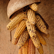 A sheaf of corn hanging under the eaves of a homestead in the village of Berwong in the Upper West region of Ghana. The kernels are being stored as seed crop for the next planting season.