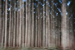 Eucalyptus plantations cover much of the fertile lands of southern Bahia State and northern Esp&iacute;rito Santo State.<br /> Eun&aacute;polis town, Bahia State - Brazil.<br /> <br /> Planta&ccedil;&otilde;es de eucaliptos cobrem boa parte das terras f&eacute;rteis do sul da Bahia e do norte do Esp&iacute;rito Santo.<br /> Eun&aacute;polis, BA - Brasil.