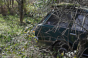 abandoned car starting being overgrown with weeds and trees