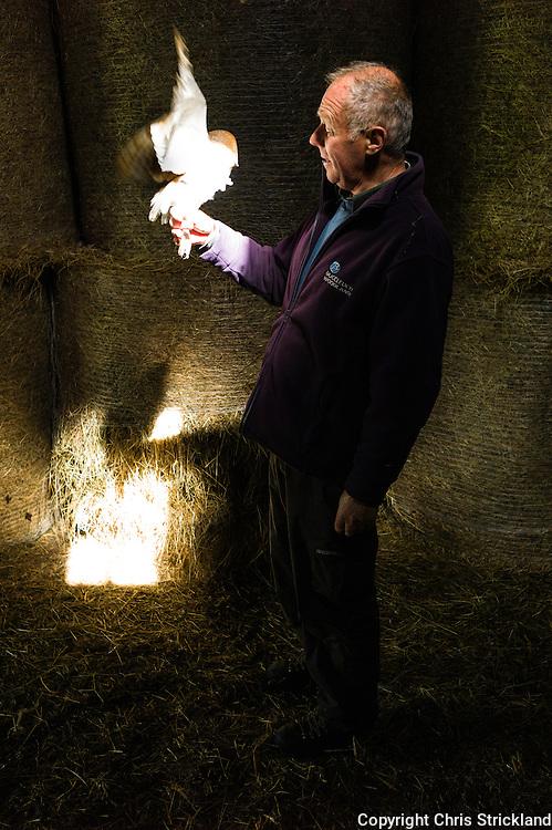 Raptor surveyor Malcolm Henderson handles a female Barn Owl while checking population levels.