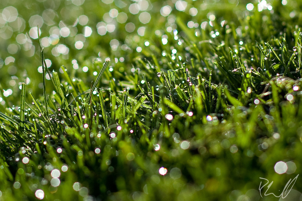 Beads of dew on the grass
