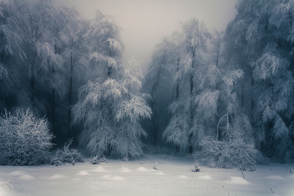 Frozen forest covered in snow