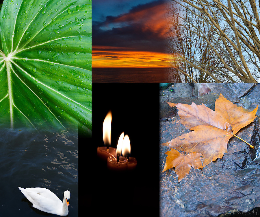 Several books that I've read recently have inspired me to live more fully in the present moment.     Observing nature and appreciating the abundant beauty we encounter daily are two ways I focus on the Now.    Many images I take are my best attempt to capture beautiful scenes that cause me to stop and be still.    In this Curation, I arranged the images to make the shape of an eye.   Can you see it?   Often it is something we see out of the corner of our eye that arrests our attention to something that brings us necessary stillness.    The swan here is that representation.