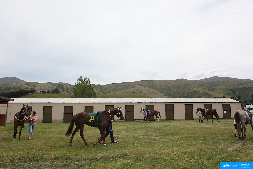Horses are prepared for the races in the parade ring during a day at the Races at the Cromwell Race meeting, Cromwell, Central Otago, New Zealand. 27th November 2011. Photo Tim Clayton