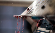 Droplet of Napa Valley Cabernet Sauvignon juice at press