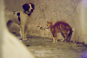 Cat and dog standing in an alleyway on Hydra, Greece.