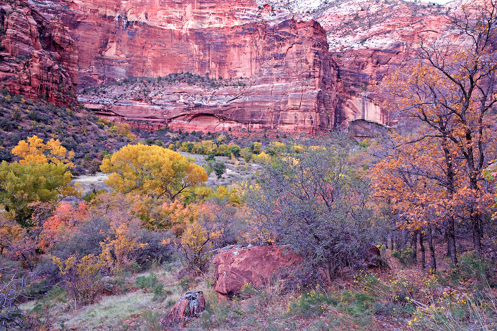 Last Evening Light on Autumn Colors in Zion Canyon, Zion National Park, Utah