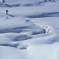 Cross-country skier in Daly Creek drainage. Yellowstone National Park, Montana.