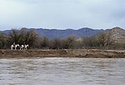 Horseback Riders, Mexico, Big Bend National Park, Big Bend, Rio Grande River, Texas, Border