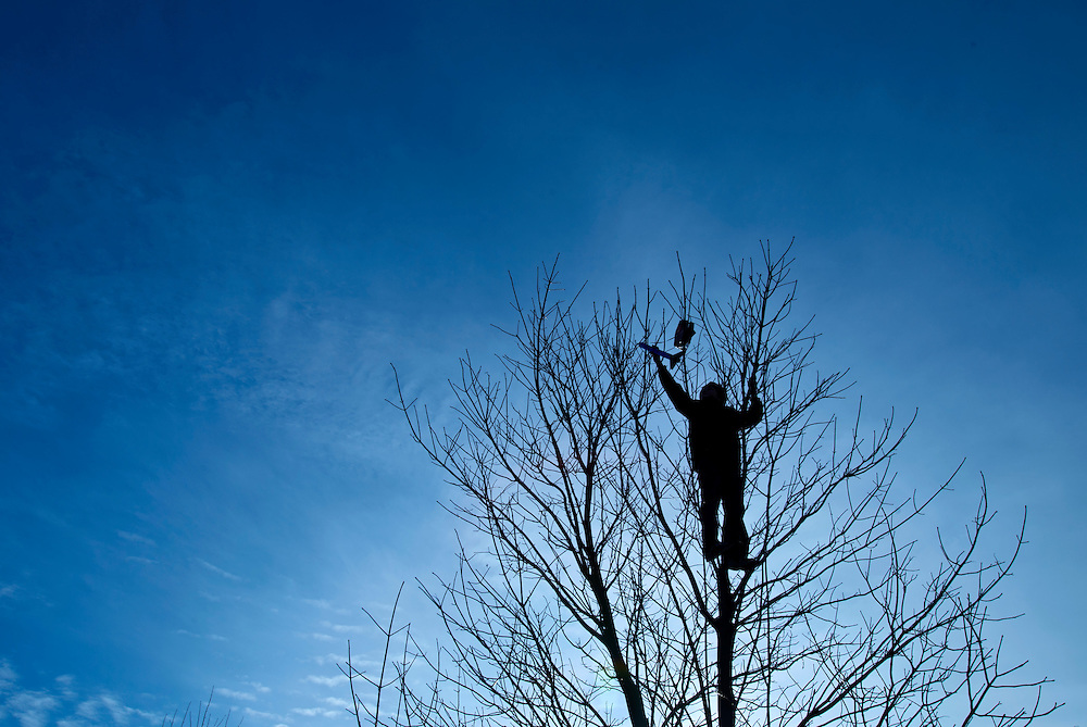 """Above the watchful eye of his mother, Nathan Parece, 9, of Kansas City, Mo., scampered up a leafless tree in Loose Park to retrieve a model rocket caught up in the branches. Parece and his family were shooting off model rockets when Nathan spotted this abandoned rocket left by another hobbyist. After several minutes of untangling the parachute, Parece netted his prize. When asked why all the effort, Nathan explained """"Well, I really, really, really, really, really like climbing trees."""""""