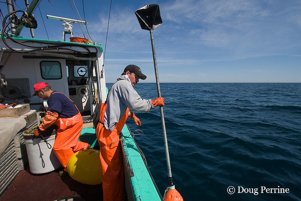 crew of commercial longline boat retrieves radar reflector pole and float while fishing for porbeagle sharks, Nova Scotia, Canada ( North Atlantic Ocean )