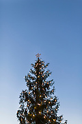 Christmas tree reaching for the sky