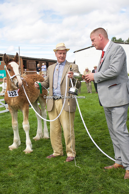 Martin Fountain's Bay Colt<br /> Born  12/05/2016<br /> Out of Woodhouse Calendar Girl by Metheringham Upton Hamlet   <br /> 1st  Foal Class<br /> Best Shire Foal