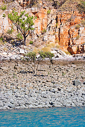 Small mangroves grow on the rocky shoreline on the Kimberley coast.