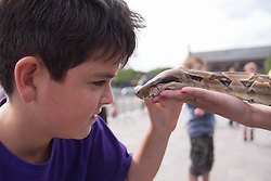 Granary Square, Kings Cross, London, August 30th 2014.  Twelve year old Ethan Tysoe pets a boa constrictor at the Battle Bridge: Boudicca Vs The Romans event in Granary Square, Kings Cross, as performers bring the area's ancient history alive. PAYMENT/CONTACT DETAILS: paul@pauldaveycreative.co.uk Tel +44 (0) 7966 016 296 or +44 (0) 208 969 6875