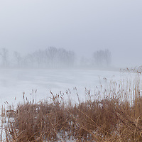 http://Duncan.co/trees-and-reeds-in-the-fog-02