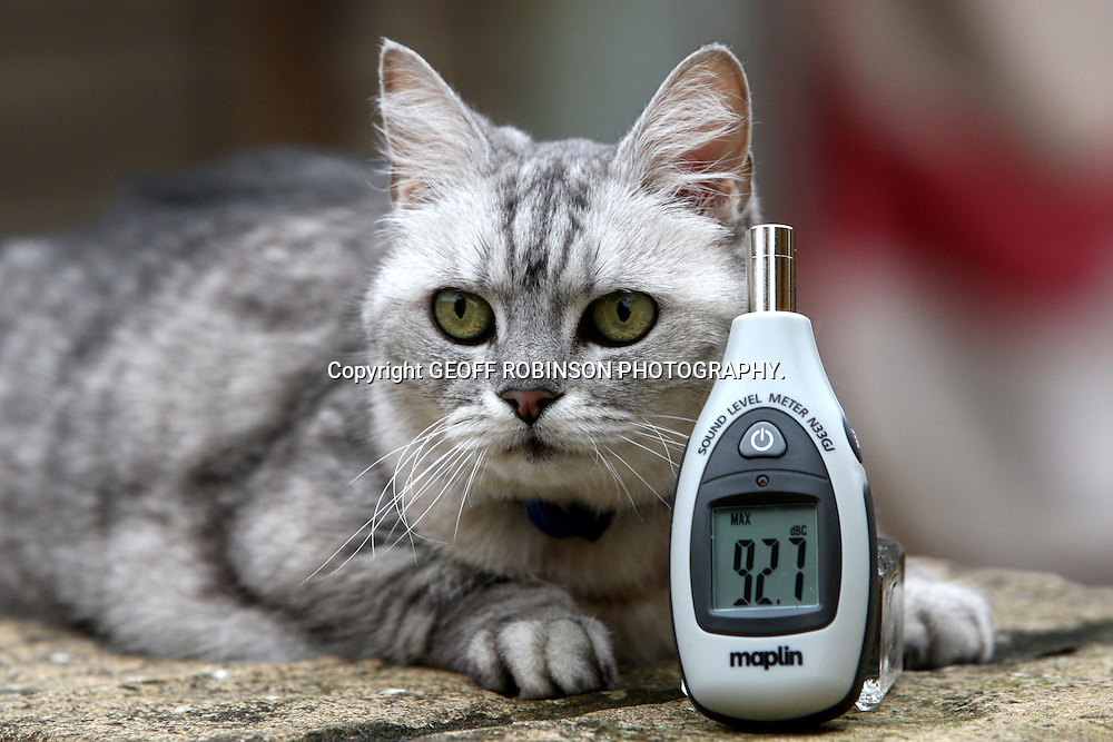 "SMOKEY WITH A SOUND METER SHOWING 92 DECIBELS... Pet cat Smokey is believed to have the LOUDEST PURR in the world - with piercing purrs as loud as a LAWNMOWER...Most cats purr at around 25 decibels but Smokey's powerful purrs average an amazing 80 DECIBELS...When measured close-up her purrs reach an incredible 92 decibels, equivalent to the noise of a lawnmower, hair dryer or a Boeing 737 coming into land...Owners Ruth and Mark Adams say Smokey's deafening purrs make it impossible for them to hear the television or radio when she is in the room and they struggle to have telephone conversations...""She has always been very vocal and purrs at some level nearly all the time,"" said Ruth, from Pitsford, Northampton...""She even manages to purr while she eats. The only time she is quiet is when she is asleep...""When I'm on the phone friends often ask what the loud noise is and they can't believe it is coming from a cat.""..SEE COPY CATCHLINE Cat has loudest purr in world"