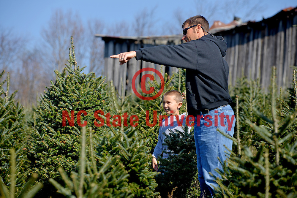 A father and son look for the perfect Christmas tree at Clawson's Choose and Cut outside Boone.