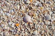 Sea shells on seashore on Captiva Island, Florida USA
