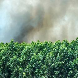 Incêndio em plantio de eucalipto (Eucalyptus sp.) em Sooretama, Espírito Santo, Brasil. ENGLISH: Fire in eucalyptus plantation (Eucalyptus sp.) in Sooretama, Espírito Santo, Brazil.