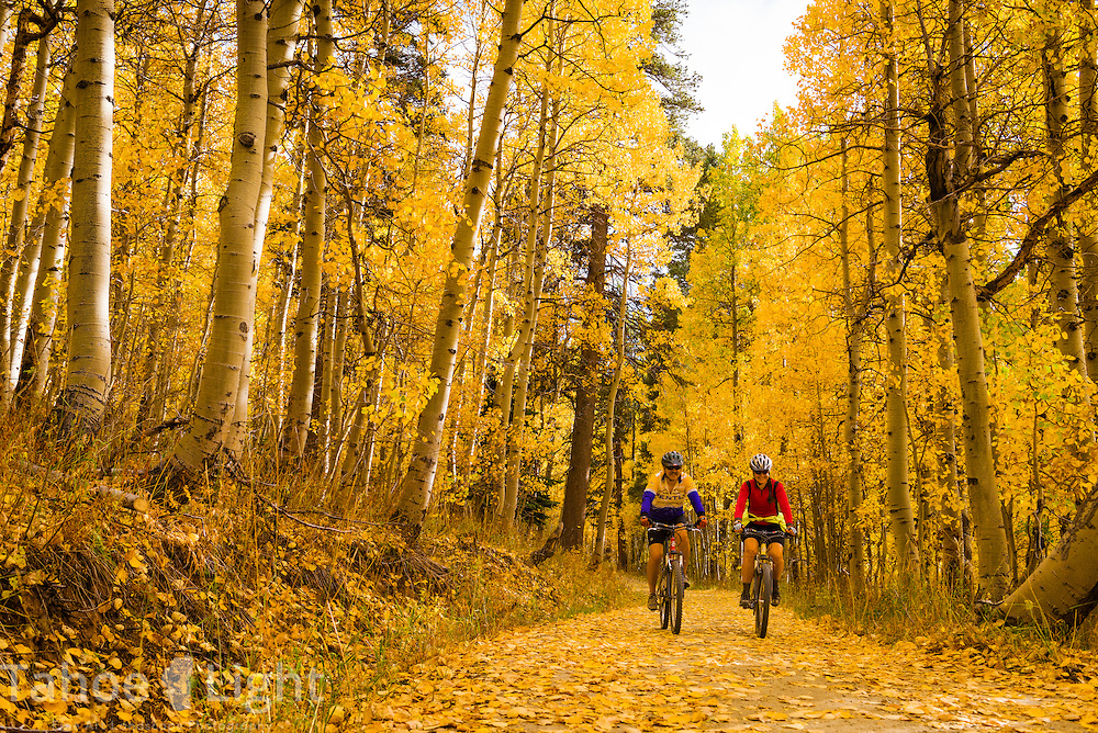 Mountain bikers and Lake Tahoe fall colors and aspen changing along Marlette Lake and the Tahoe Flume Trail.