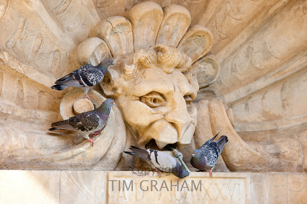 Pigeons drinking from water fountain in Piazza Francesco Ferrucci in Radda-in-Chianti, Tuscany, Italy