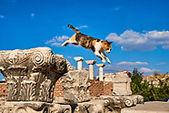 Cats from Ephesus