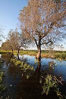 Alcune delle campagne sommerse dalle acque riversate dal depuratore nel bacino erano un tempo degli uliveti. Dato l'inquinamento di queste acque difficilmente queste campagne potranno più dare frutti adatti ad essere consumati o venduti, almeno nel breve periodo.