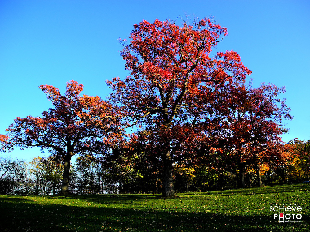 Fall color in Olin Park, Madison, Wisconsin.
