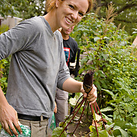 A community gardener proudly holds a freshly harvested Cylindrica beet.
