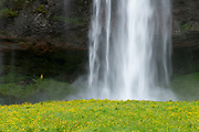 Seljalandsfoss waterfall in Iceland.