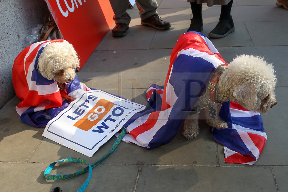© Licensed to London News Pictures. 28/03/2019. London, UK. Couple dogs wrapped in Union Jack flags with a placard on the floor outside the Houses of Parliament. British Prime Minister Theresa May will seek a third vote on her Brexit deal on Friday 29 March 2019, subject to The Speaker, John Bercow's approval.  Photo credit: Dinendra Haria/LNP