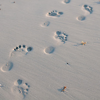 Foot steps walking along the sand at sunset