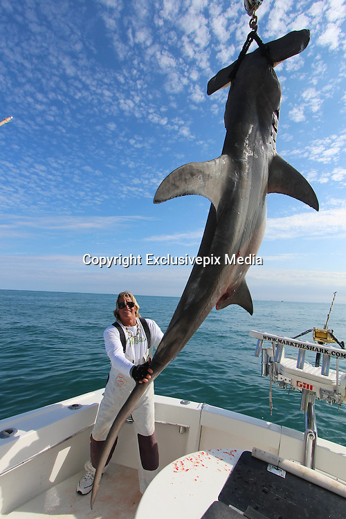 Miami Sea Fisherman Mark the shark pictured with a hugh Hammerhead  shark that was caught on Saturday over 14' in length and weighing over 850 lbs..it took Mark 4 hrs to land, In his belly was 6 stingrays, a tarpon head, 2 groupers, 4 lion fish, and part of a sea turtle, <br /> <br /> Mark said &quot;As far as hammerheads go..that's one the the biggest in these waters&quot;<br /> <br /> Mark the Shark, who is licensed Shark fisherman by the state of Miami, Tiger sharks and hummerhead sharks are protected upto 3 miles in state waters can be caught but are all tagged and released, sharks outside 3 miles in federal waters can be harvested for scientific purpose, research and even food for restaurants,<br /> &copy;Exclusivepix Media