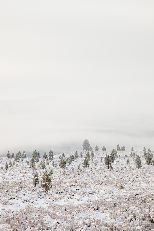 """Snowy Martis Valley 1"" - Photograph of a foggy and snow covered Martis Valley in Truckee, California."