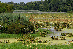 The largest remaining freshwater tidal marsh in Pennsylvania, seen from the dike trail of the John Heinz National Wildlife Refuge in Tinicum Township, Pennsylvania, on August 5, 2018.
