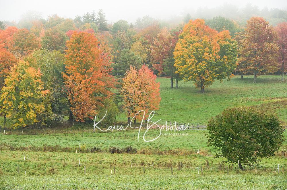 Fall Color pops through the fog Monday morning at Ramblin' Vewe Farm in Gilford.  (Karen Bobotas/for the Laconia Daily Sun)