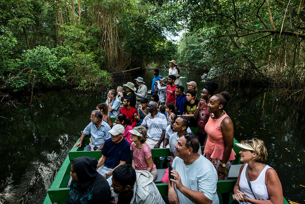 PORT OF SPAIN, TRINIDAD - FEBRUARY 14, 2017: Tourists enjoy a bird-watching tour in Caroni Swamp wetlands, one of the best places in the country to spend time in nature. Nanan's runs daily boat tours (60TT) at 4 p.m.; that take two-and-a-half hours. Guides steer green-painted pontoons down the calm waterways of the reserve, stopping to point out the different types of mangroves that line the banks, as well as snowy egrets, herons of all different hues and, depending on the day, caimans, anteaters and snakes hanging from tree branches. The tour pauses before sunset for the startling sight of thousands of bright scarlet ibis (one of Trinidad's national birds) flying home to roost. PHOTO: Meridith Kohut for The New York Times