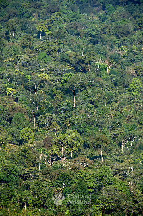 Tropical evergreen dipterocarp forest in Thailand