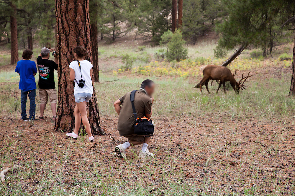 "What's going through his mind? ""If I move like a ninja, he won't see me"". Tourists approaching an elk. South Rim of Grand Canyon National Park."