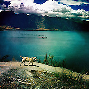 A dog walks on a country path as the TSS Earnslaw, the 100 year old vintage coal fired passenger steam ship which sails on Lake Wakatipu, Queenstown, New Zealand. The popular tourist attraction is celebrating it's centenary year with celebrations planned for October 2012.  Queenstown, Central Otago, New Zealand. 29th February 2012. Photo Tim Clayton