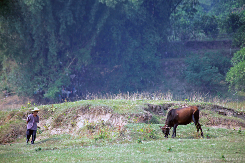 Asia, China, Guilin. Peasant and buffalo along Li River in rural China.