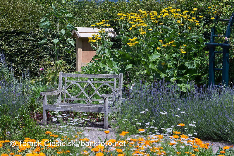 Wooden bench set in kitchen garden