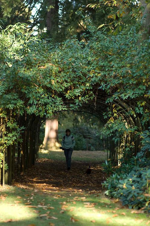 Arley Arboretum, Worcestershire.