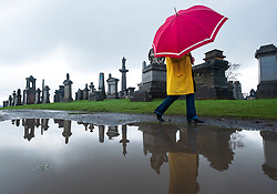 Woman in yellow coat and red umbrella reflected in puddle walking in Necropolis cemetery in Glasgow, Scotland, UK