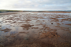A gravelly sandbank is revealed in Deception Bay, Camden Sound on a super low tide.