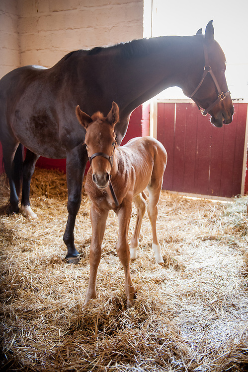 Mare with new foal in College Park, Maryland